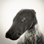 niki,chaussette-terrier à poil dur ( taille 43-46 )